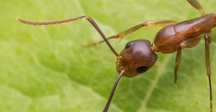 Cómo elaborar un remedio casero para repeler las hormigas paso a paso