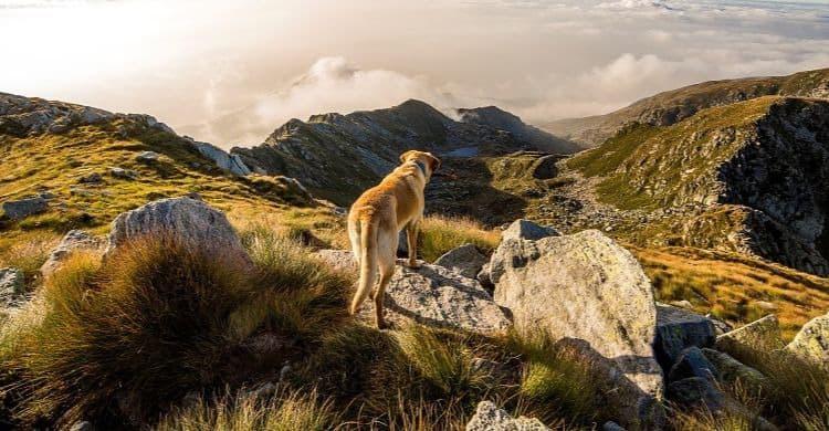 Cómo viajar con el perro en vacaciones