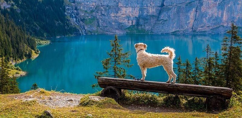 Los mejores consejos para viajar con el perro en vacaciones