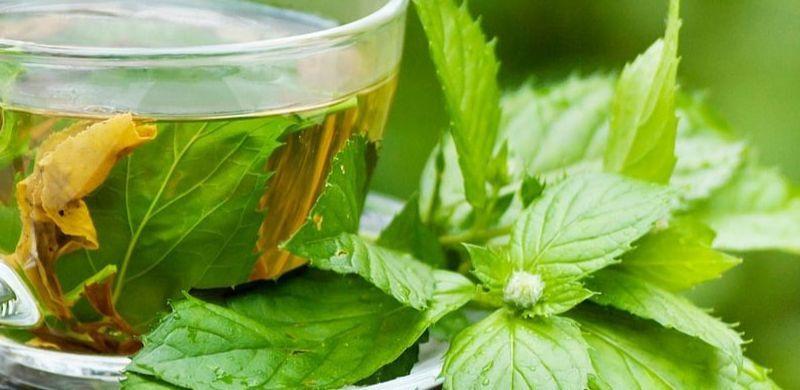 Cuáles son los beneficios del té verde para la piel